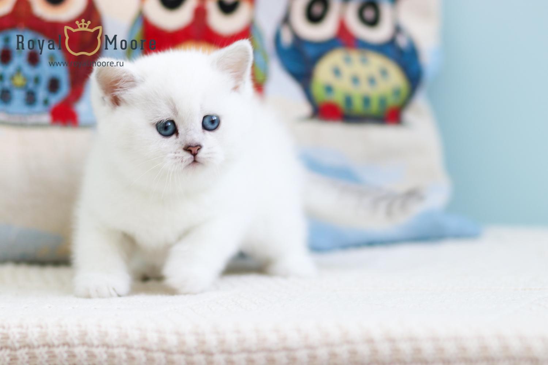 роскошь клуб кошек в москве